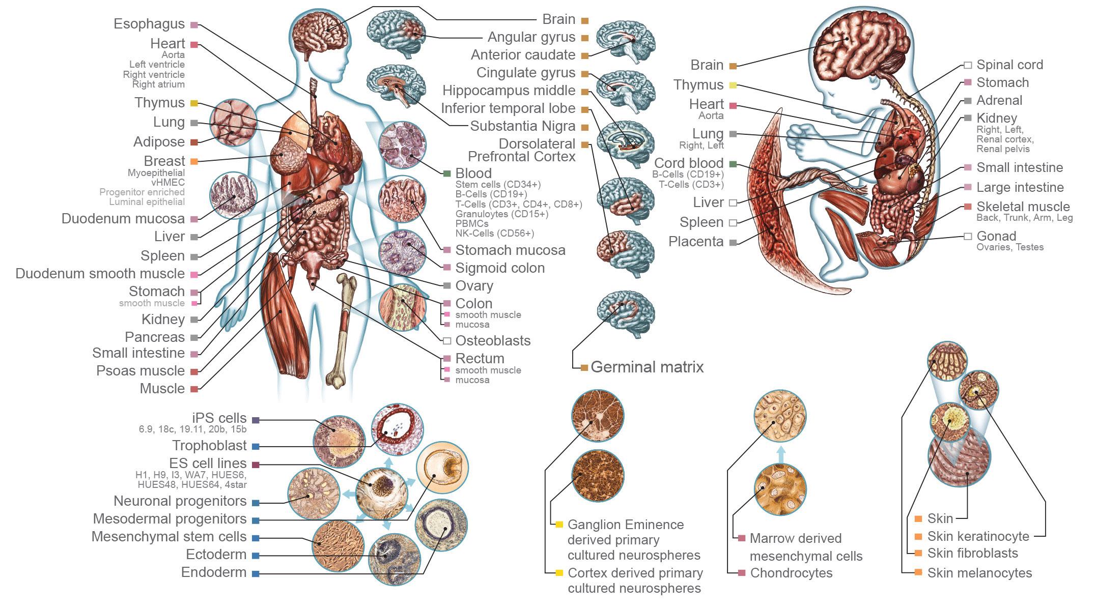 Epigenomik Startet Durch Newsletter Epigenetik